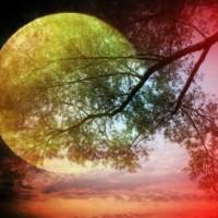 Hata Yoga – Align with the Divine
