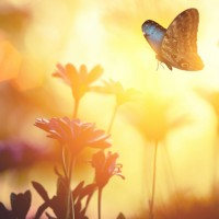 Radiating Compassion