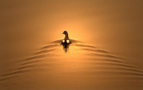 movement and stillness